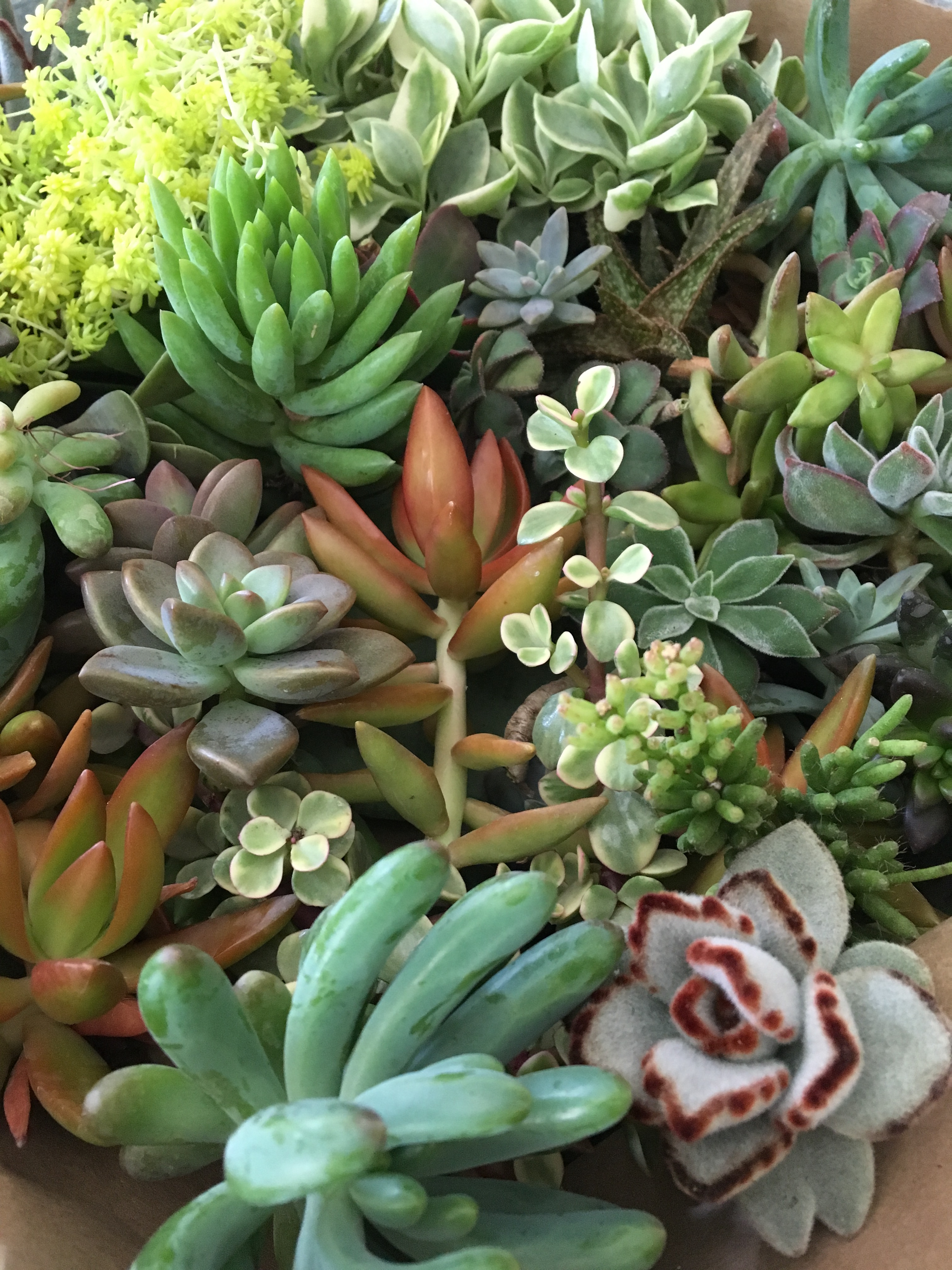 Succulent Wreath DIY - WaterHouse Market on